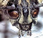 Kopf vom Käfer (vergrößert)