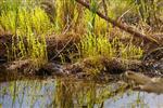 Feuchtgebiet Havel