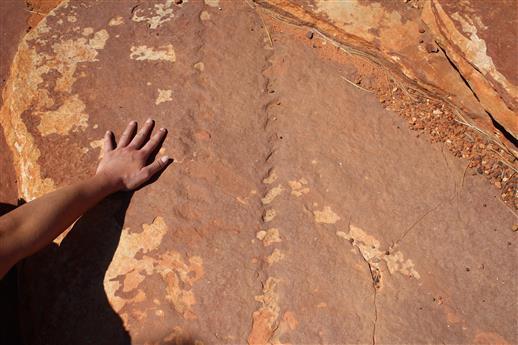 Spuren des ersten Landtieres
