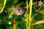 ich Frosch - und du ?