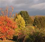 Herbstfarbenfeuerwerk