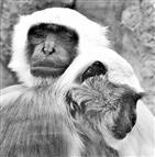 Affen im Zoo Gelsenkirchen