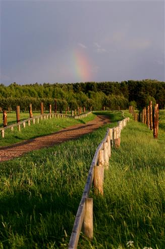 Abendstimmung mit Regenbogen in der Schorfheide