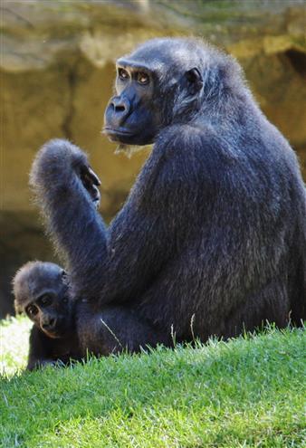 Mutter und Kind bei den Affen