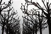 Bäume im Winterschlaf