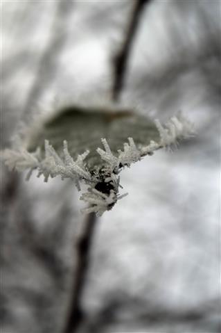 Eiskristalle am Blatt