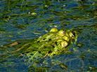 Frosch hoch 2