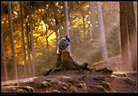Pfau im Wald
