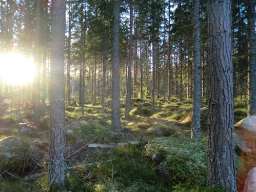 Winter-Sonnenlicht