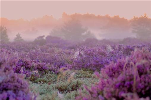 mystisches Heideland