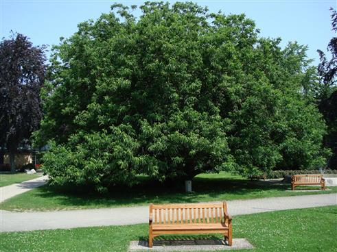 ein zauberhafter Baum
