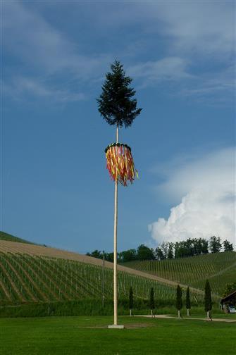 war auch mal ein Baum - der Maibaum