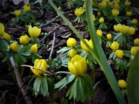 Diese gelbe Pracht zu dieser Jahreszeit-einfach toll!