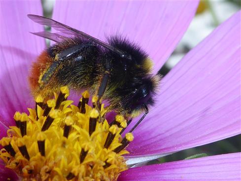 Beim Pollen tanken