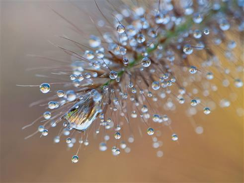 Wasserdiamanten