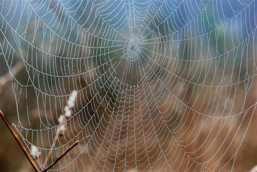 Spinnennetz am Herbstmorgen