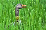 87 E - versteckt sich im Gras