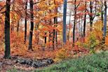 Herbst in der Wetterau