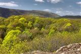 Pfälzerwald im Frühling