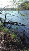 Aufbruch der Natur am See