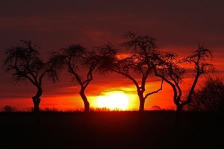 sonnenaufgang mit apfelbäumen