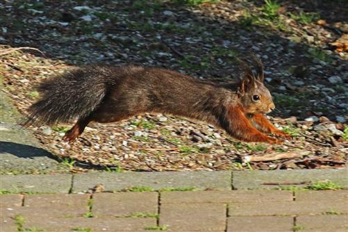 eichhörnchen schwebt