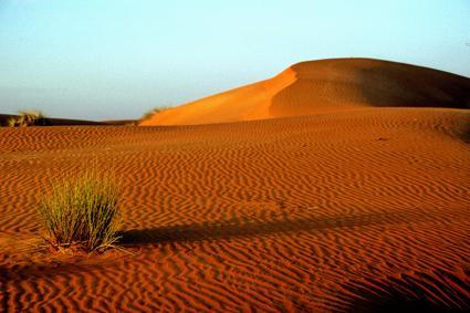 morgen in der arabischen wüste