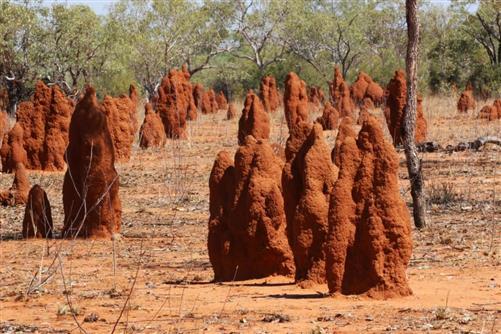 termitenskulpturenpark