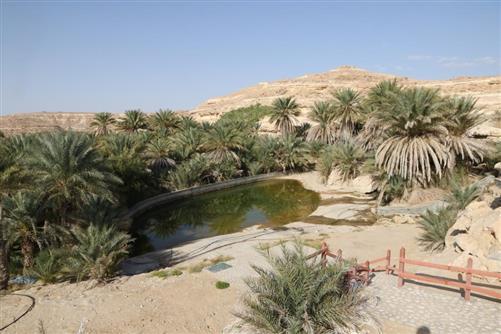 mudayy oase