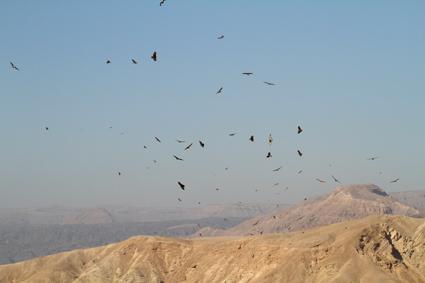 vogelzug israel