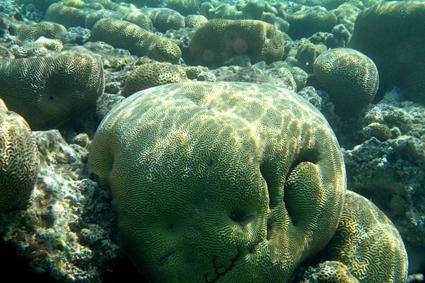 korallen im roten meer