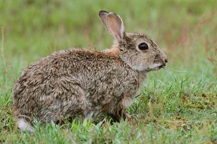 kaninchen im regen
