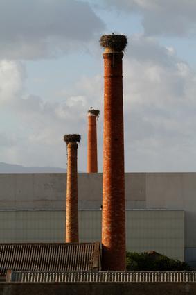 storchenhorste auf schornsteinen