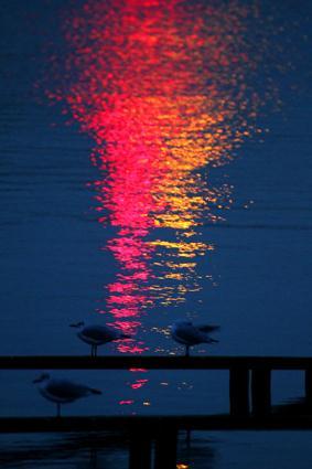 lachmöwen im hafenlicht