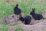 kaninchen mischung wild mit haus