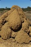 termitenhügeltroll