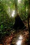 licht im regenwald