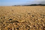 heuschrecke in wüste