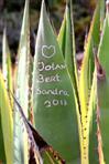 agave als kommunikationsmedium