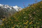 bergwiese mit großglockner
