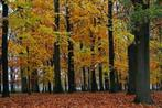 herbstwald