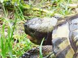 Endlich Regen - Schildkröte Karl