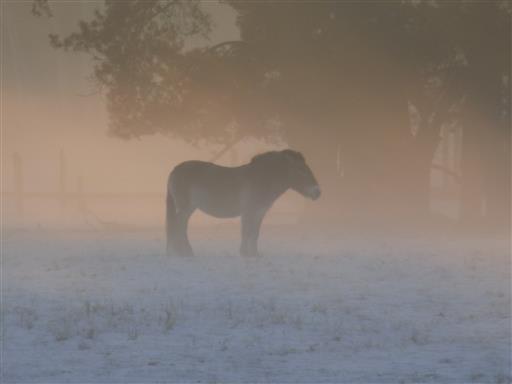 Wildpferd im Winternebel
