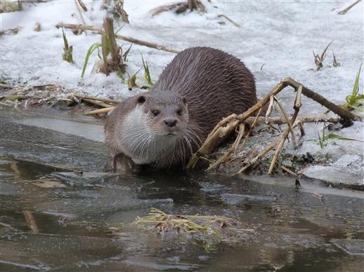 Otter sind neugierig