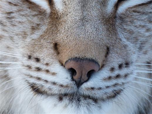 Schöne Nase