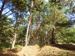 Naturwald, einfach schön und einsam