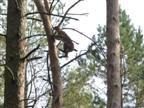 Schnell ab auf den Baum
