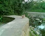 Ente im Hammerpark