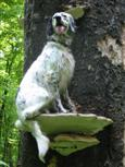 Setter auf Baumpilz postiert
