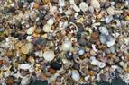 Muscheln und Schneckengehäuse am Strand